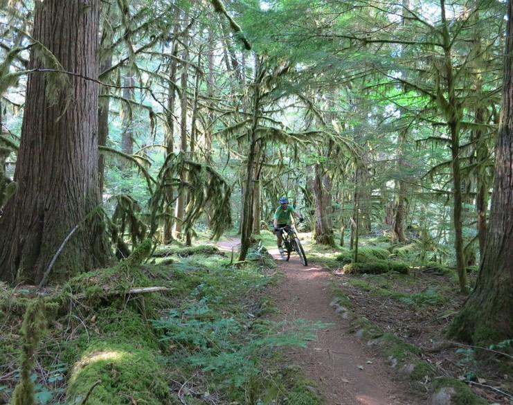 McKenzie River Trail, Eugene, Oregon
